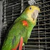 Adopt A Pet :: Pepper - Neenah, WI