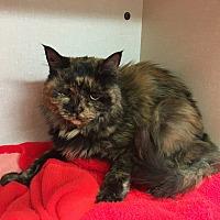 Adopt A Pet :: Baby Girl - Saylorsburg, PA