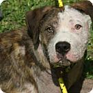 Adopt A Pet :: Baker