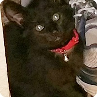Adopt A Pet :: Cooky - North Highlands, CA