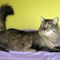 Adopt A Pet :: Ariel - Powell, OH