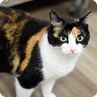 Calico Cat for adoption in Negaunee, Michigan - Callie
