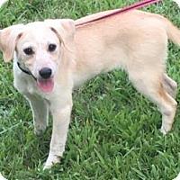 Adopt A Pet :: Millie meet me 8/4 - East Hartford, CT