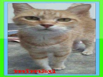 Domestic Mediumhair Cat for adoption in Fort Walton Beach, Florida - MIMZY