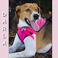 Adopt A Pet :: DARLA - Dallas, NC