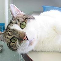 Adopt A Pet :: Valentine - Cumberland, ME