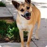 Adopt A Pet :: Goldie - justin, TX