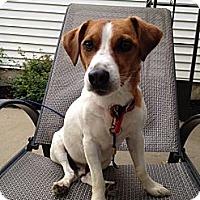 Adopt A Pet :: Diesel - Rhinebeck, NY