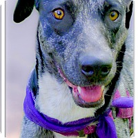 Adopt A Pet :: Carmella loving soul - Sacramento, CA