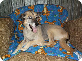 German Shepherd Dog Mix Dog for adoption in Arkadelphia, Arkansas - Kassee