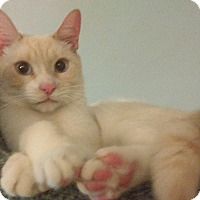 Adopt A Pet :: DITEE - Little Neck, NY