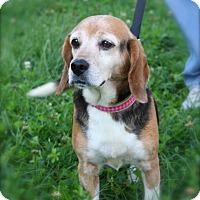 Adopt A Pet :: Dory Columbia - Waldorf, MD