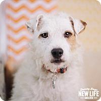 Adopt A Pet :: Harry - Portland, OR