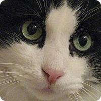 Adopt A Pet :: CHARLIE - Brea, CA