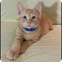 Adopt A Pet :: Fuego - Orlando, FL