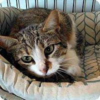 Adopt A Pet :: Andrina - Jefferson, NC