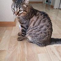 Adopt A Pet :: Shylo - San Jose, CA