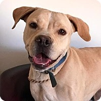 Adopt A Pet :: Tessa - Toluca Lake, CA