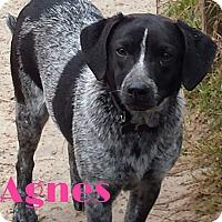 Adopt A Pet :: Agnes - Grand Rapids, MI