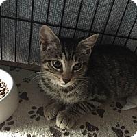 Adopt A Pet :: Parker - Bethpage, NY