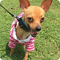 Adopt A Pet :: Peter Pan - Holliston, MA