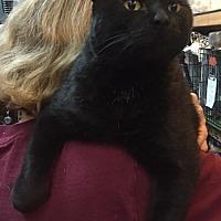 Adopt A Pet :: Mitten - Columbus, OH