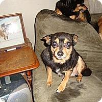 Adopt A Pet :: Lizzie and Jesse - Leesport, PA