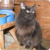 Adopt A Pet :: Trixie - Maxwelton, WV