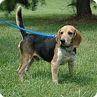 Adopt A Pet :: Frankie Baldwin - Waldorf, MD