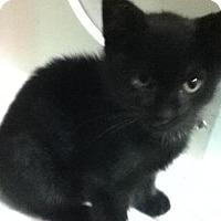 Adopt A Pet :: Chester - Hamilton, ON