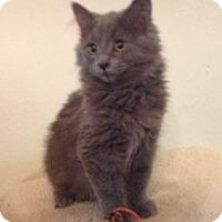 Adopt A Pet :: Lucas - Santa Rosa, CA
