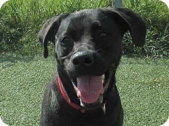 Labrador Retriever Mix Dog for adoption in Lloydminster, Alberta - Brandy
