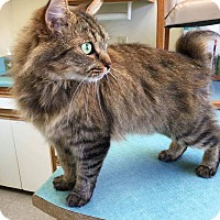 Adopt A Pet :: Matthew - Simpsonville, SC