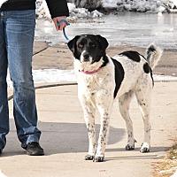 Adopt A Pet :: Trixy - Meridian, ID