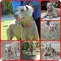 Adopt A Pet :: Chelsea - Inverness, FL