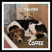 Adopt A Pet :: Toby - Gautier, MS