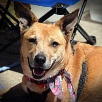 Cattle Dog Mix Dog for adoption in Alpharetta, Georgia - Triscuit
