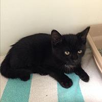 Adopt A Pet :: BANJO - Putnam Hall, FL