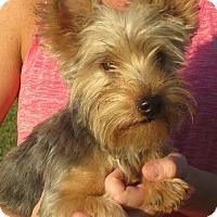 Adopt A Pet :: Gum Drop - Westport, CT