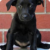 Adopt A Pet :: Karla - Waldorf, MD
