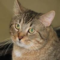 Adopt A Pet :: Lord Peanut Butter - North Myrtle Beach, SC