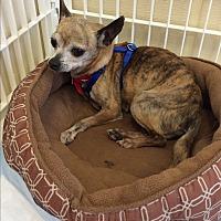 Adopt A Pet :: Elsie - Mechanicsburg, OH