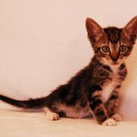 Adopt A Pet :: Finley - Toccoa, GA