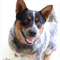 Adopt A Pet :: Dalton - Texico, IL