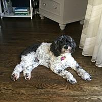 Adopt A Pet :: Maggie 8yr - Mentor, OH
