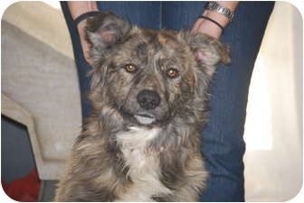 Border Collie Mix Dog for adoption in Cranford, New Jersey - RJ