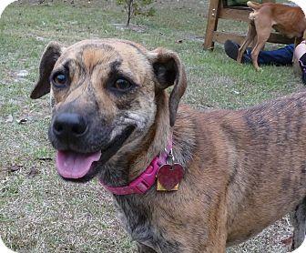 Greyhound/Whippet Mix Dog for adoption in Jesup, Georgia - Emmy