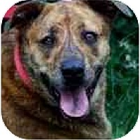 Adopt A Pet :: GABBY - Wakefield, RI