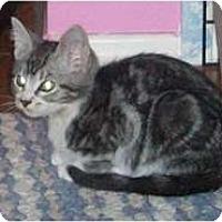 Adopt A Pet :: Benton - Shelton, WA