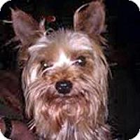 Adopt A Pet :: Manny (GA) - Suwanee, GA